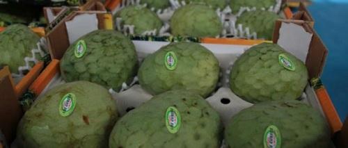 La Costa Tropical es el mayor productor de chirimoyas del mundo, con el 70 % de la producción.