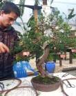 Almuñécar prepara la X Expo Bonsái con más de un centenar de variedades