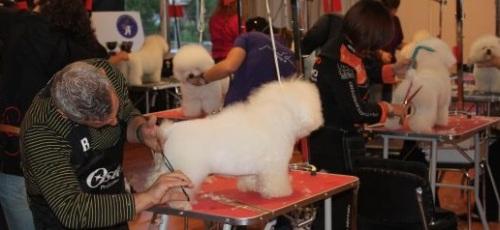 """II Concurso Nacional Canino y II Trofeo """"Ciudad de Almuñécar"""""""