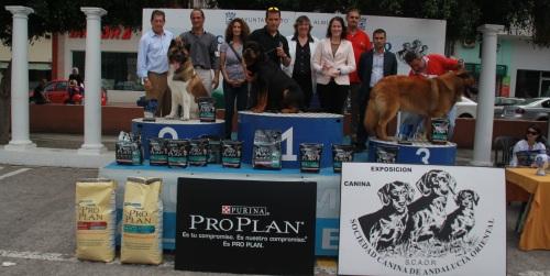Un Rottweiler gana el II Concurso Canino Ciudad de Almuñécar