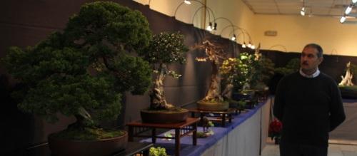 El maestro italiano del bonsái Giorgio Castagneri dará una conferencia y demostración este domingo en Almuñécar