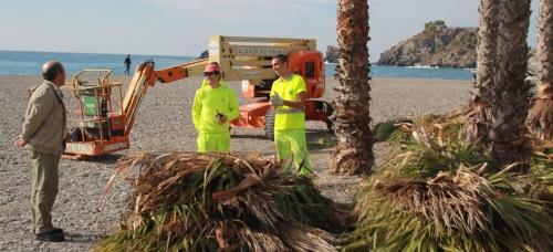 Limpieza de las palmeras de Puerta del Mar y Fuente Piedra