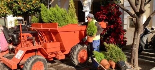 El Ayuntamiento de Almuñécar retira los árboles navideños para darle una segunda vida