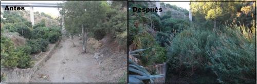 CAUCE DEL BARRANCO COTOBRO Antes y después 14