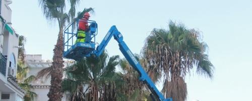 Operario en labores de poda de palmeras en Almuñécar