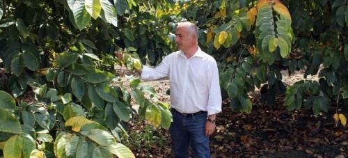 Sergio García Alabarce, candidato a la Alcaldía de Almuñécar por el PSOE, en una plantación de chirimoyos