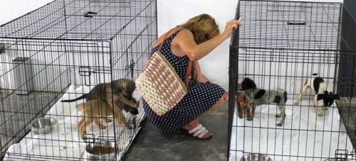 El Ayuntamiento inicia una campaña de concienciación y adopción de animales