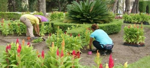 Las concejalías de Mantenimiento y Parques y Jardines inician una campaña para embellecer Motril