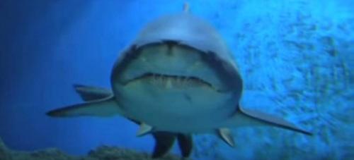 Tiburón acuario Almuñécar