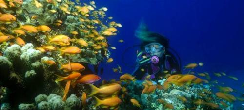 La Herradura será sede del Campeonato de Europa de Fotografía Submarina 2016