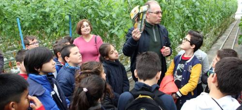 Alumnos de primaria de Motril conocen el trabajo de los agricultores.png