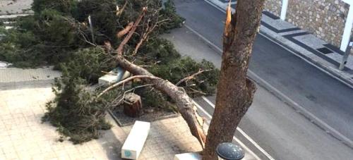 Parques y Jardines, Bomberos, Protección Civil y Policía Local permanecen en alerta para atender posibles urgencias causadas por el temporal