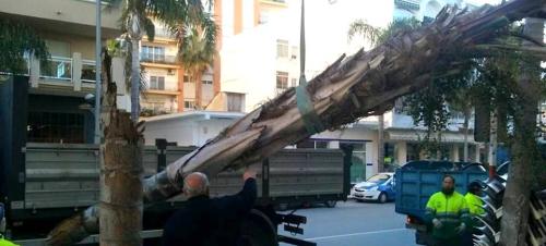 Según el Ayto. los daños ocasionados por el viento en Almuñécar rondarán los 200 mil euros