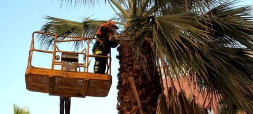 La concejalía de Parques y Jardines continúa con el plan de poda de palmeras y árboles en calles y parques de la ciudad