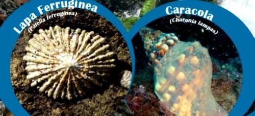 Almuñécar acoge la Semana del Medio Ambiente sobre su litoral del 6 al 12 de julio