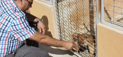 La 'Campaña de Concienciación, Civilización y Pro-adopción' anima a los motrileños a adoptar mascotas