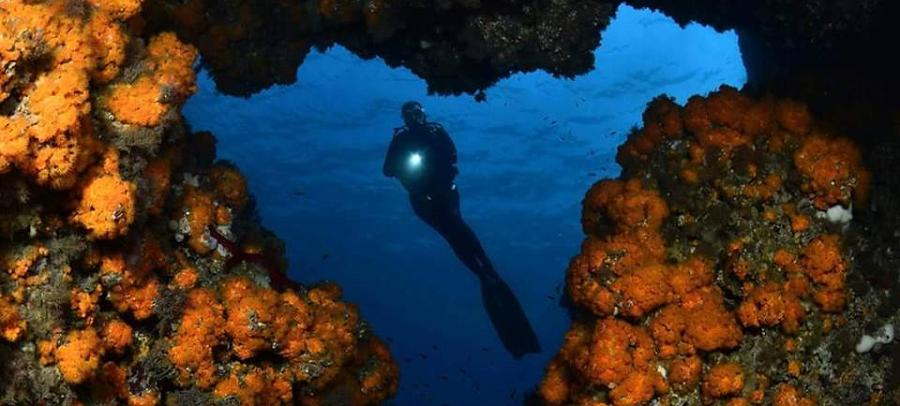 la-herradura-acoge-el-28o-campeonato-de-espana-de-fotografia-submarina-y-el-18o-campeonato-de-video-submarino