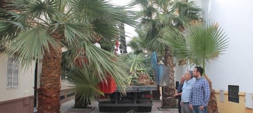 comienza-el-plan-de-poda-y-limpieza-de-las-palmeras-del-municipio