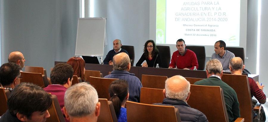 agricultores-de-motril-y-la-comarca-resuelven-sus-dudas-sobre-las-ayudas-para-modernizar-los-invernaderos