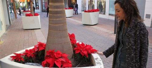 parques-y-jardines-denuncia-los-actos-vandalicos-en-el-centro-donde-se-han-arrancado-decenas-de-pascueros