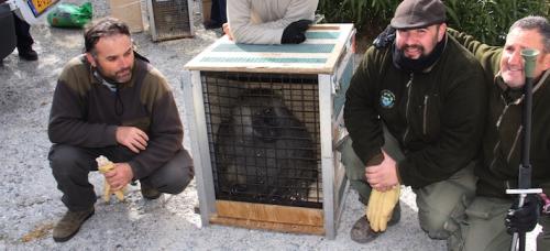 faada-traslada-47-animales-de-pena-escrita-a-centros-de-belgica-y-holanda