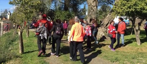 vi-marcha-solidaria-caminando-contra-el-cancer-mas-de-mil-personas-recorren-la-ruta-de-los-olivos-centenarios-de-orgiva