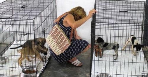 Diputación exigirá el 'sacrificio cero' en su servicio de recogida y alojamiento de animales abandonados