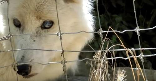FAADA alerta de la posible muerte de los animales que quedan en el zoo de Peña Escrita, en Almuñécar