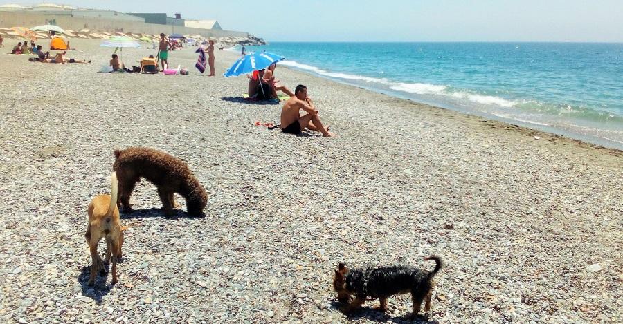 Motril se convierte en referente con la única playa para perros de la provincia de Granada