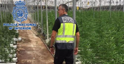 La Policía Nacional desmantela una de las mayores plantaciones de marihuana localizadas hasta la fecha en Andalucía