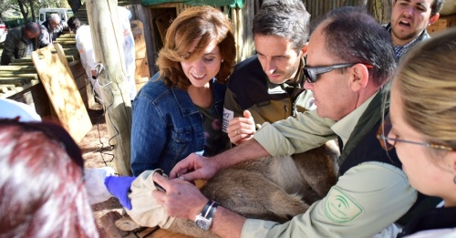 La Junta impulsa actividades formativas para el seguimiento, control y conservación de la cabra montés