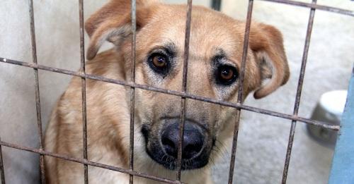Diputación promoverá la adopción de mascotas para llegar al 'sacrificio cero'