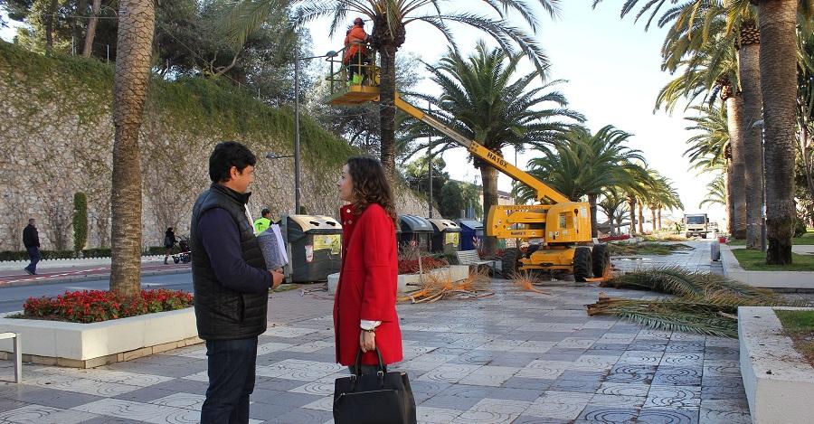 Parques y Jardines realiza labores de poda y limpieza en las palmeras del Paseo de Las Explanadas