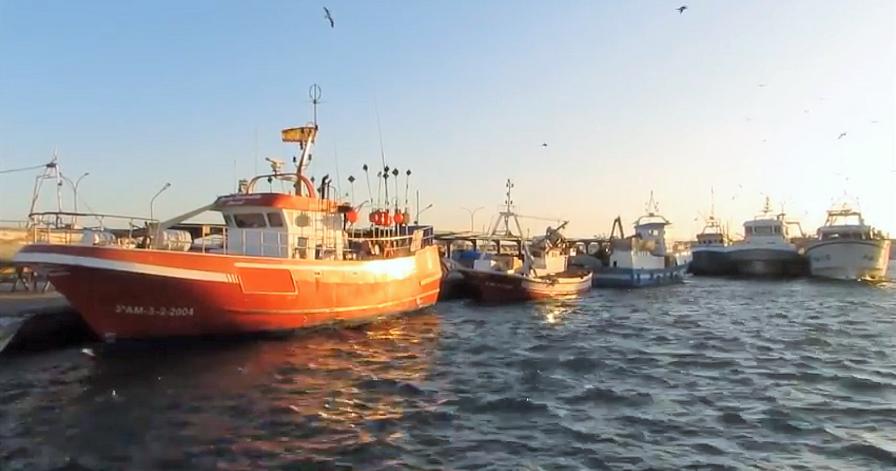 Dársena pesquera del Puerto de Motril_