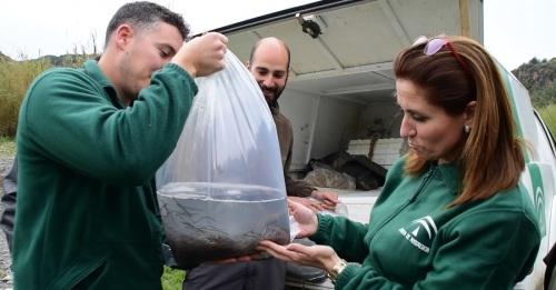 Medio Ambiente libera en el río Guadalfeo alevines de anguilas procedentes de un decomiso