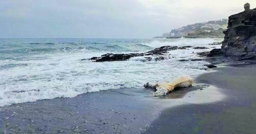 Aparece un caballo muerto en la playa de Calabajío, en Almuñécar