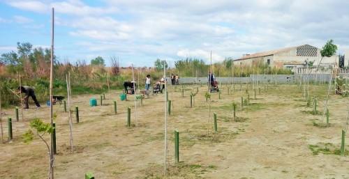'El Bosque de la Vida' de la Charcha de Suárez alcanza el millar de plantaciones.jpg