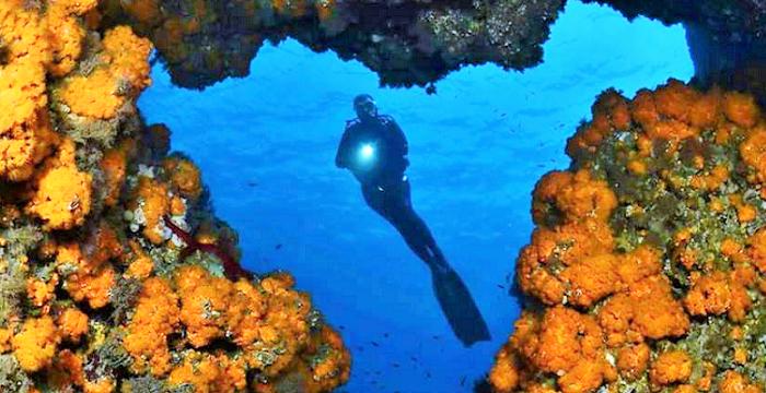Rafael Fernández Caballero y Óscar Luna Romero ganan el I Open de Fotografía Submarina 'Bahía de La Herradura'.png