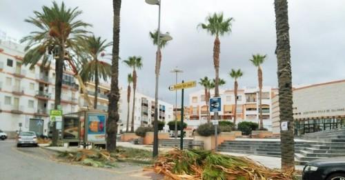 Medio Ambiente lleva a cabo la limpieza de las palmeras de Salobreña