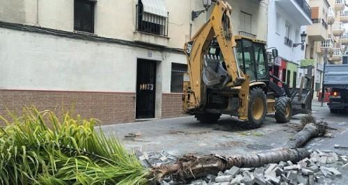 Almuñécar_poda de palmeras en la avda. de Andalucía.JPG
