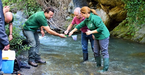 Medio Ambiente libera 2000 alevines de trucha común en el Río Poqueira.jpg