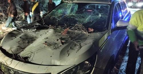 Cae un árbol sobre un vehículo cuando circulaba por la carretera de la Cabra en el municipio de Jete.jpg