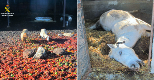 El SEPRONA de Motril investiga a un individuo por dejar morir de hambre a 2 caballos y 4 ovejas.png