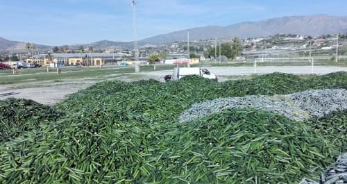 Los agricultores podrán verter sus pepinos en la planta de residuos vegetales de Galindo.jpg