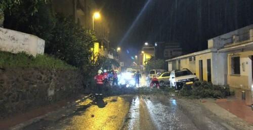 Un árbol caído obstruyó la carretera de la Cabra A-4050 en Torrecuevas