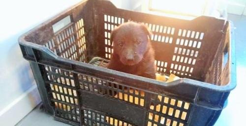 Recuperan de madrugada un perrito abandonado en los aparcamientos de un centro comercial de Motril.jpg