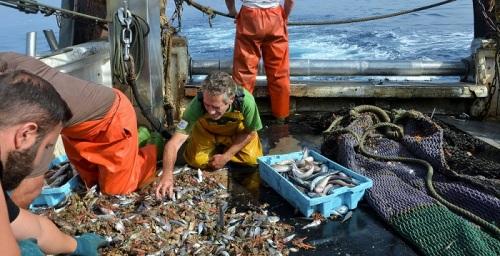 El sector pesquero del Mar de Alborán promueve 'Descartes0Alborán'.jpg