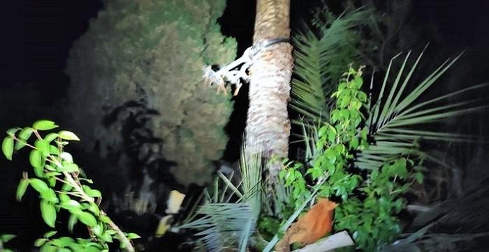 Los Bomberos de Almuñécar rescatan a un hombre que quedó colgado boca abajo cuando limpiaba una palmera.jpg