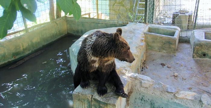 Los cinco osos de Peña Escrita serán acogidos en un santuario de Hungría