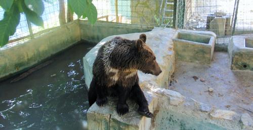 Los cinco osos de Peña Escrita serán acogidos en un santuario de Hungría.png
